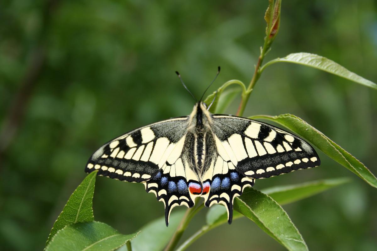 Le jardin des papillons parc aoubr - Images de papillon ...